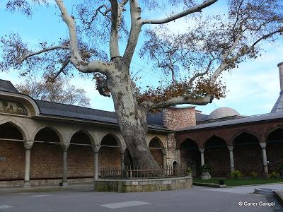 Bâbüssaâde Önündeki Çınar Ağacı'nı Fatih'in Diktirği Söylenir.